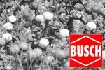 Busch N Blumen und Pflanzen